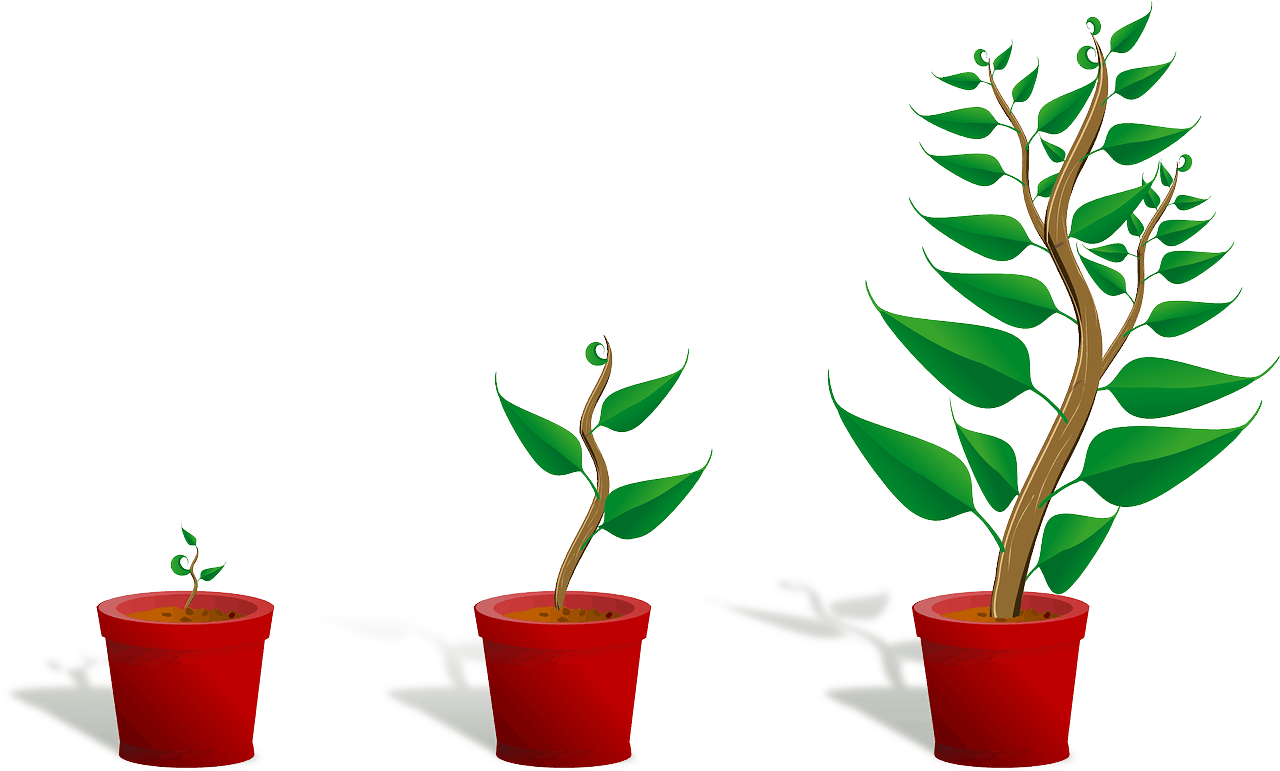 צמחים בגדלים שונים